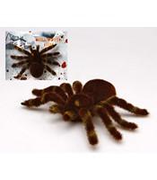Paianjen Tarantula gigant