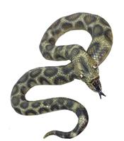 Sarpe Anaconda realist