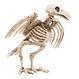 Decoratiuni si Farse Halloween Schelete Decoratiuni si Farse | Schelete Decoratie Schelet Cioara 18 cm